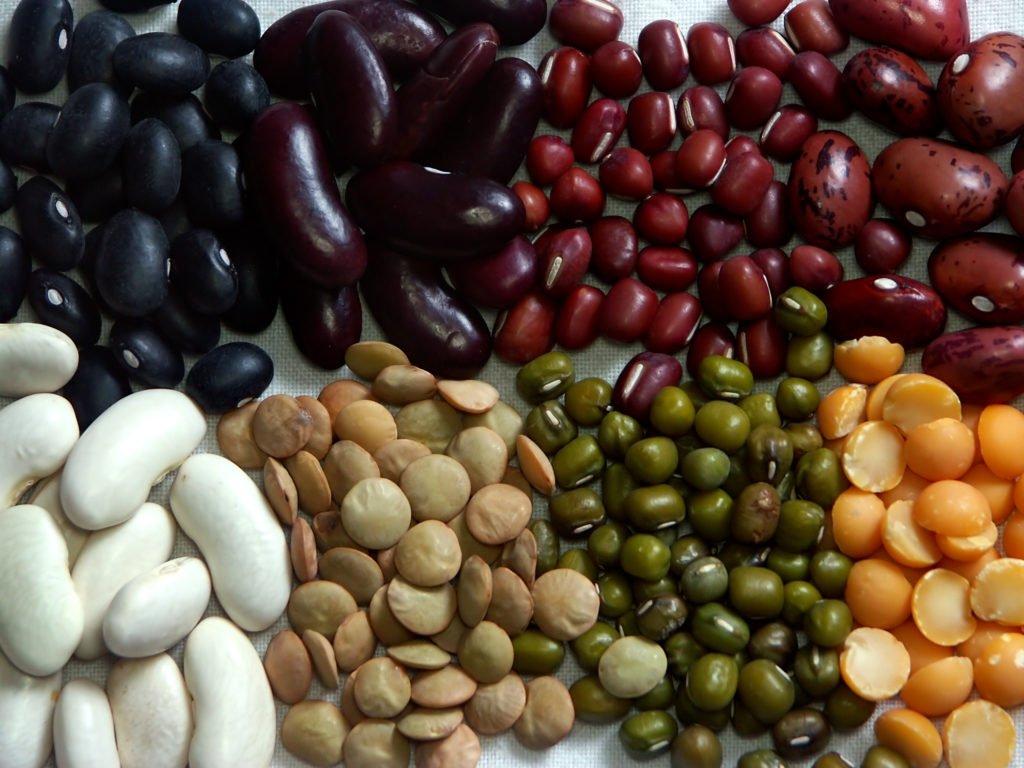 8 verschiedene Bohnensorten für einen autarken Gemüseanbau