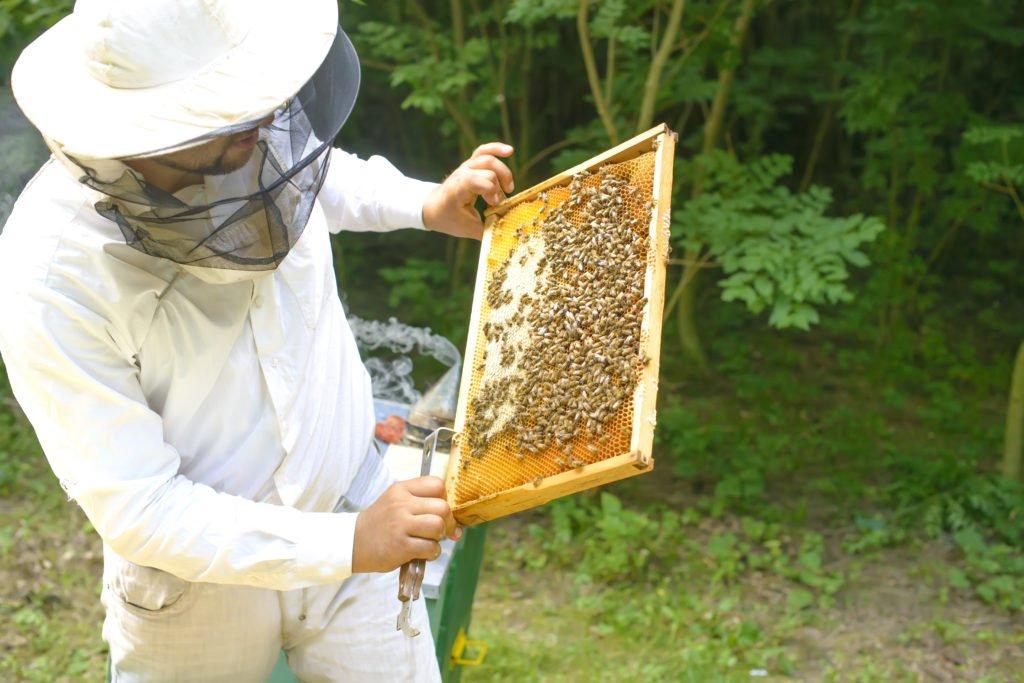 Selbstversorger Imker mit Bienen